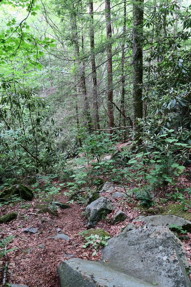 Sassafras Falls Spur Trail -- 3,400'