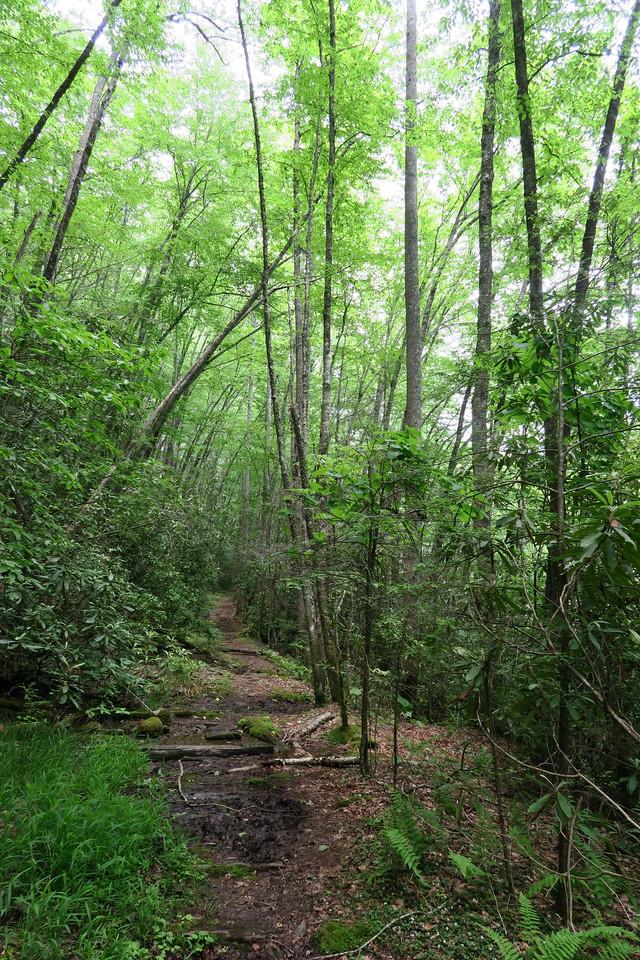 Snowbird Creek Trail -- 3,280'