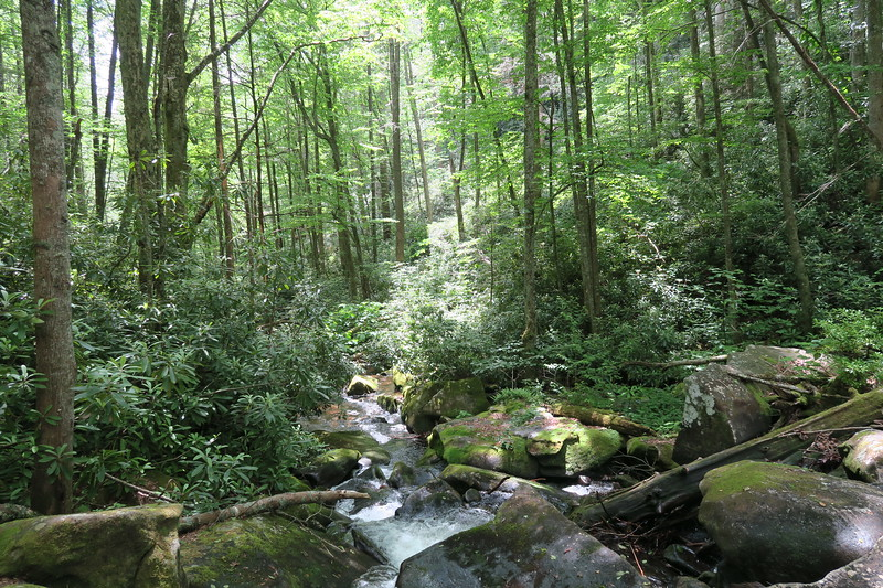 Sassafras Creek @ Sassafras Falls -- 3,360'