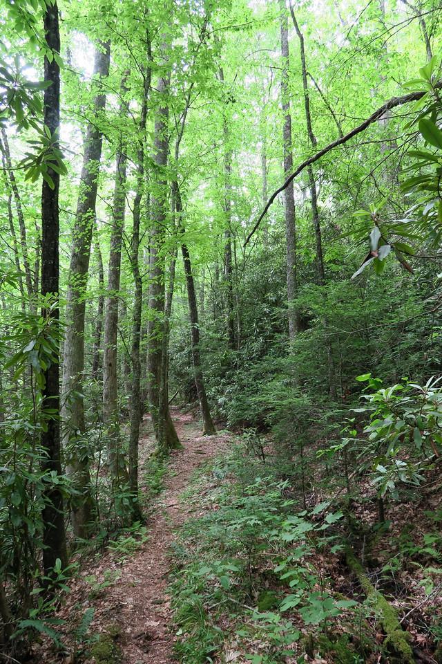 Sassafras Creek Trail -- 3,240'
