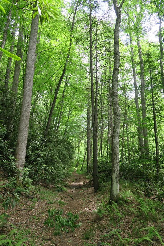 Snowbird Creek Trail -- 3,170'