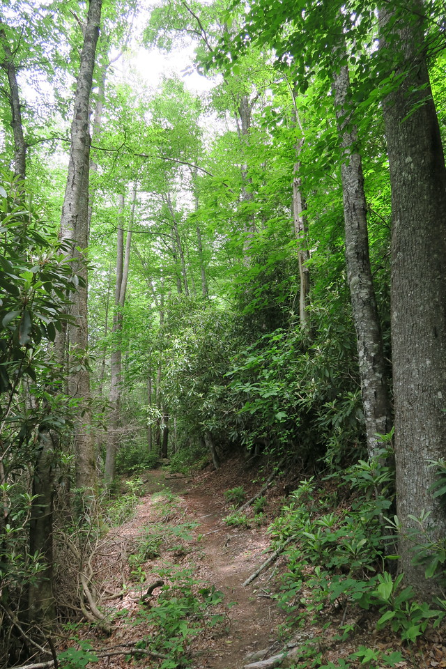 Sassafras Creek Trail -- 3,360'