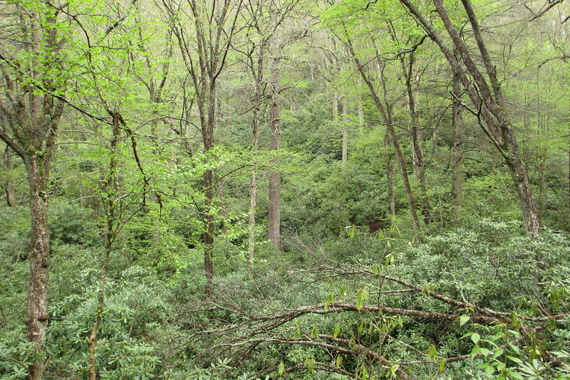 A blanket of green, as only the forests of the Southern Appalachians can provide...