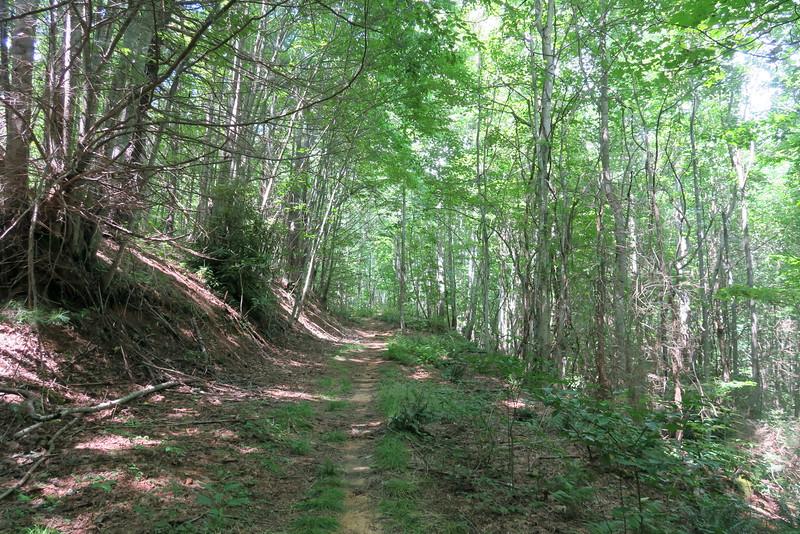 Thompson River Trail - 2,950'