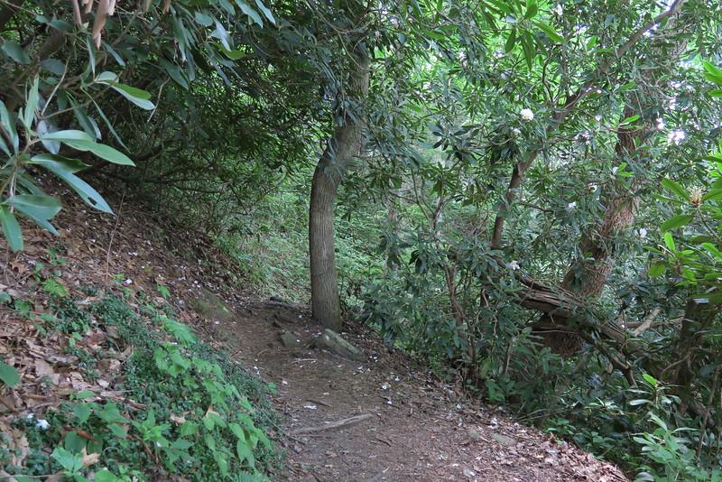 Whitewater Falls Trail