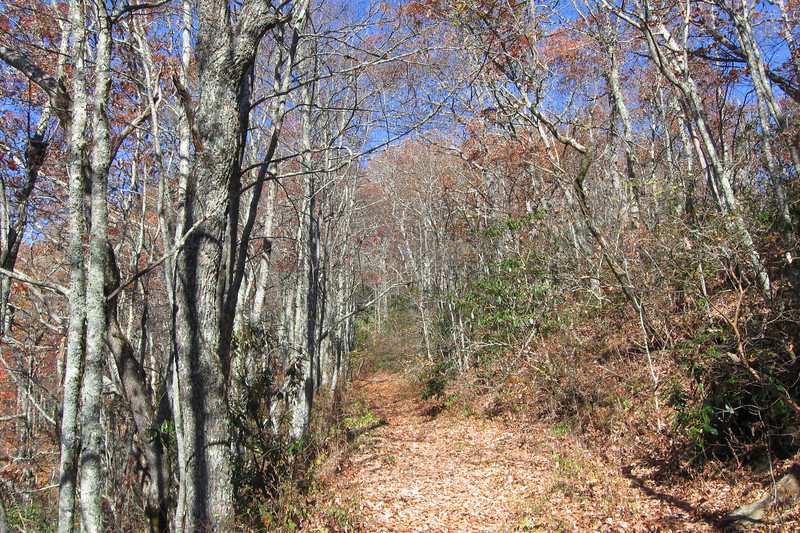 Old Wesser Bald Access Road