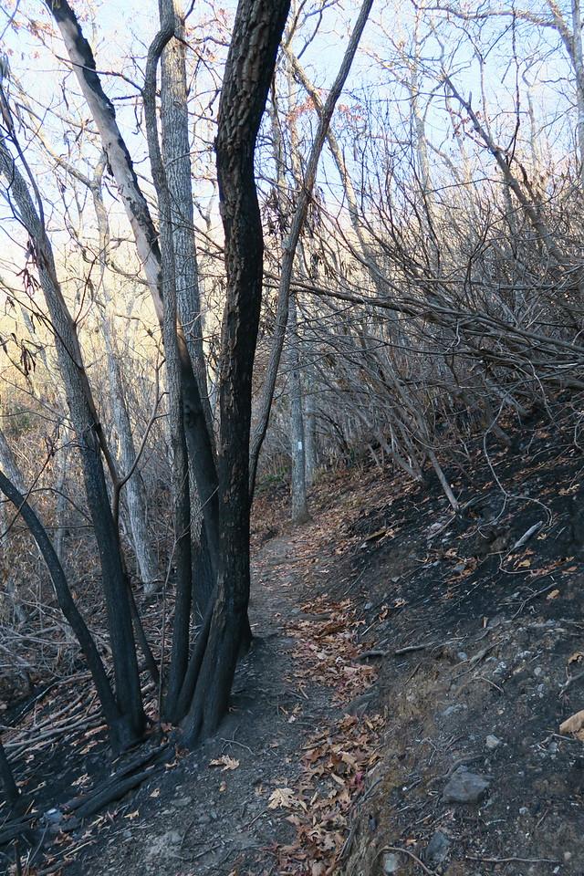 Appalachian Trail -- 3,950'
