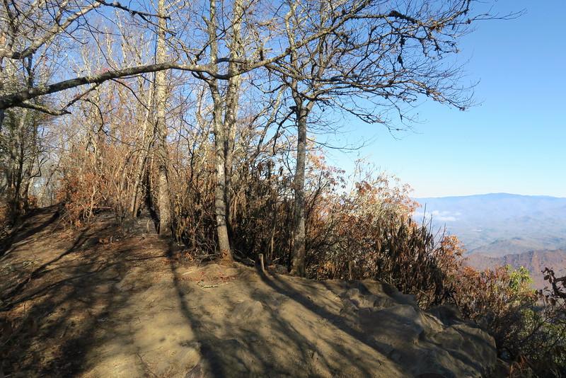 Appalachian Trail-Wesser Bald Summit Spur -- 4,610'