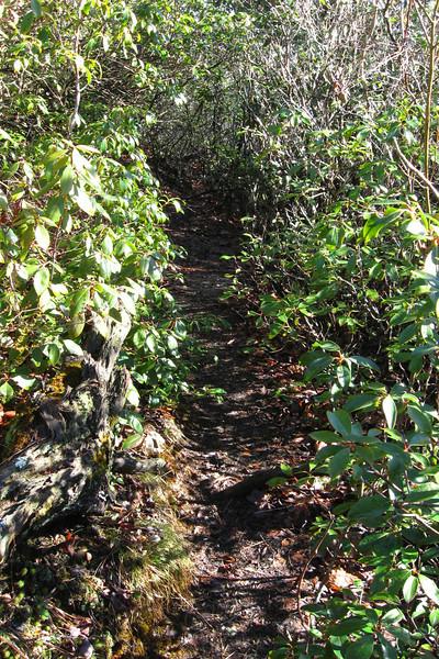 Devils Courthouse Spur Trail