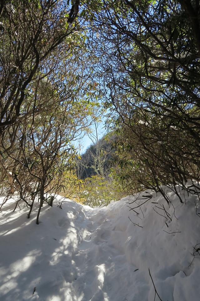 Devil's Courthouse Spur Path -- 4,530'