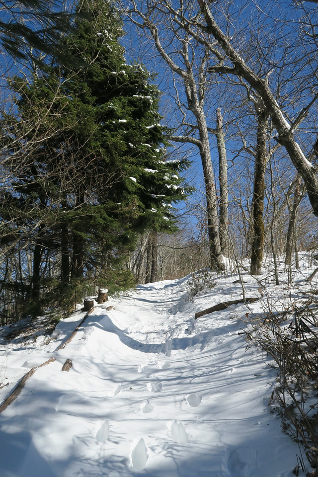 Whiteside Mountain Loop Trail -- 4,850'