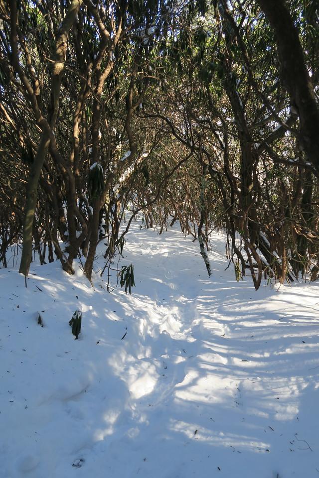 Devil's Courthouse Spur Path -- 4,520'