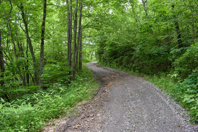Barnett Knob Access Road -- 4,520'