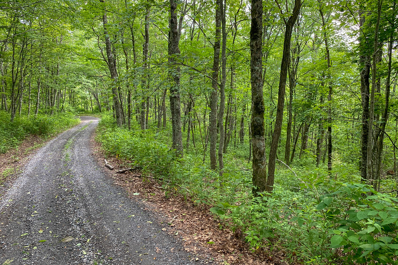Barnett Knob Access Road -- 4,500'