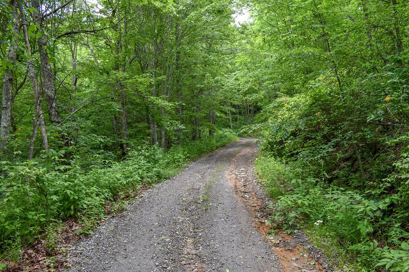 Barnett Knob Access Road -- 4,550'
