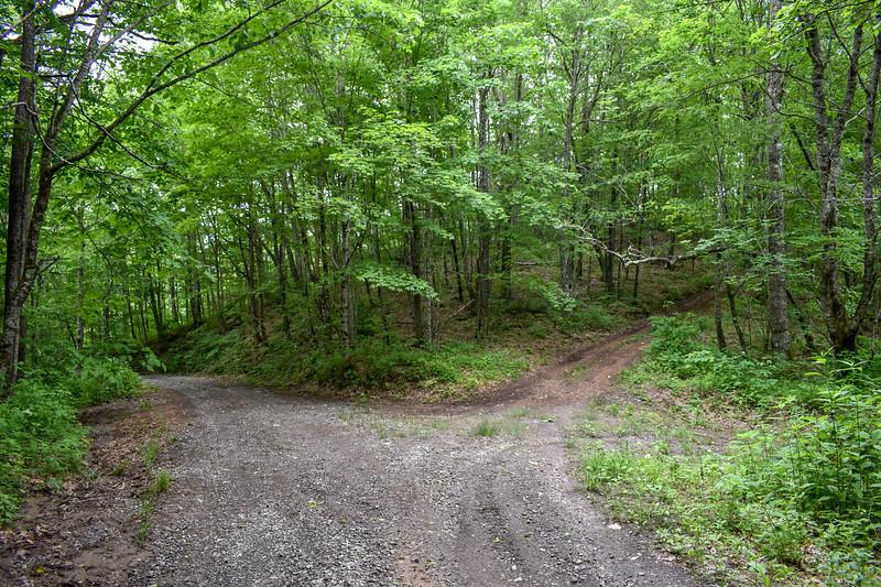 Barnett Knob Access Road -- 4,460'