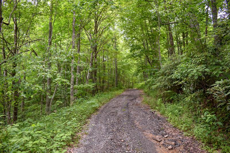 Barnett Knob Access Road -- 4,400'