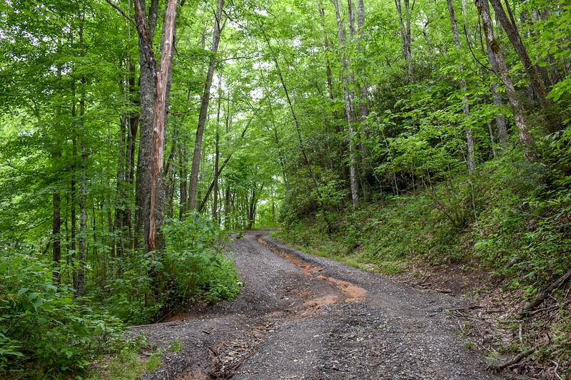 Barnett Knob Access Road -- 4,330'