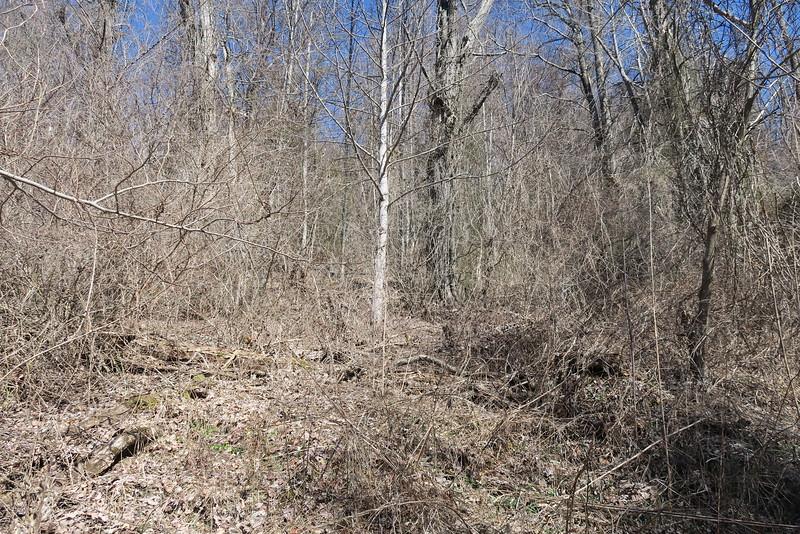 Trombatore Trail - 3,520'