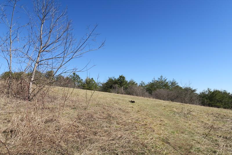 Blue Ridge Pastures - 3,650'