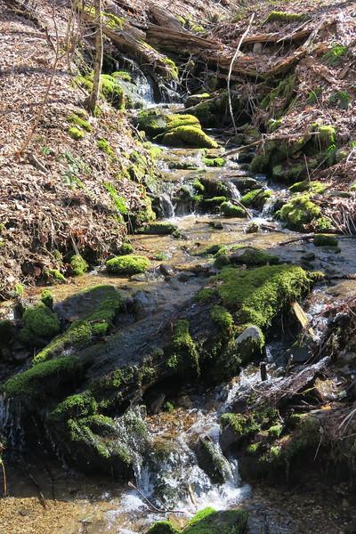 Trombatore Trail - Brush Creek - 3,180'