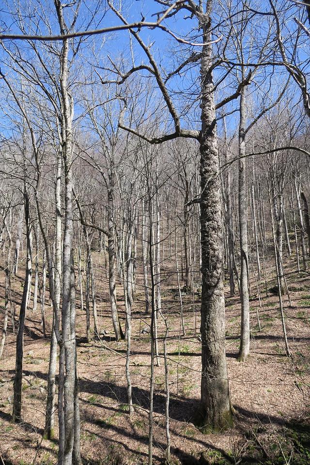 Trombatore Trail - 3,400'