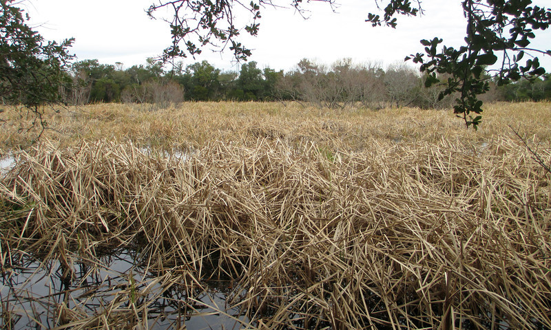 About halfway along the loop the trail passes the reed-choked waters of Jeanette's Sedge...
