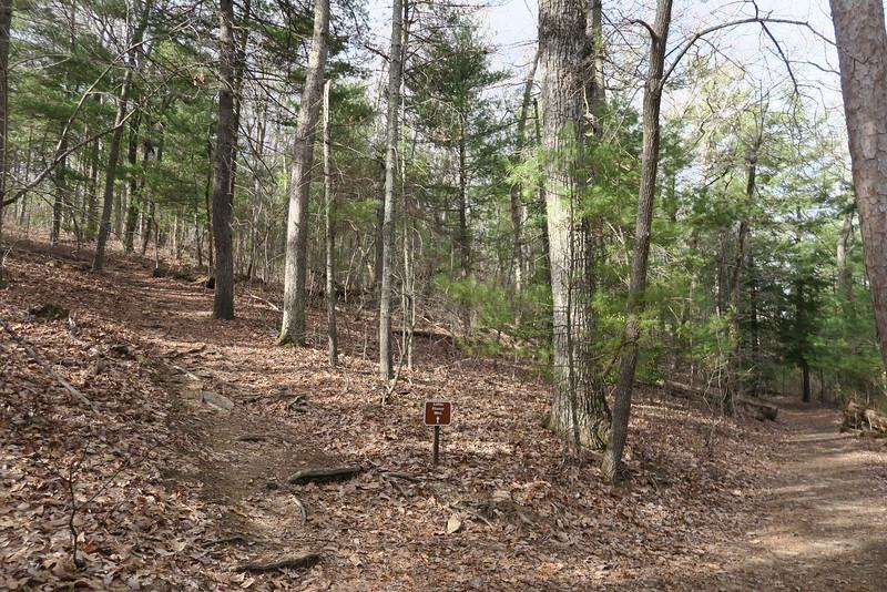 Memminger Loop-Little Glassy Mountain Trail Junction