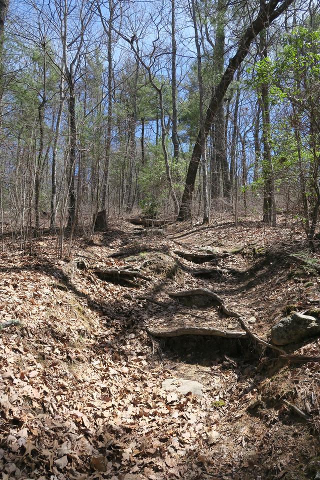 Chattooga Ridge Trail -- 3,600'