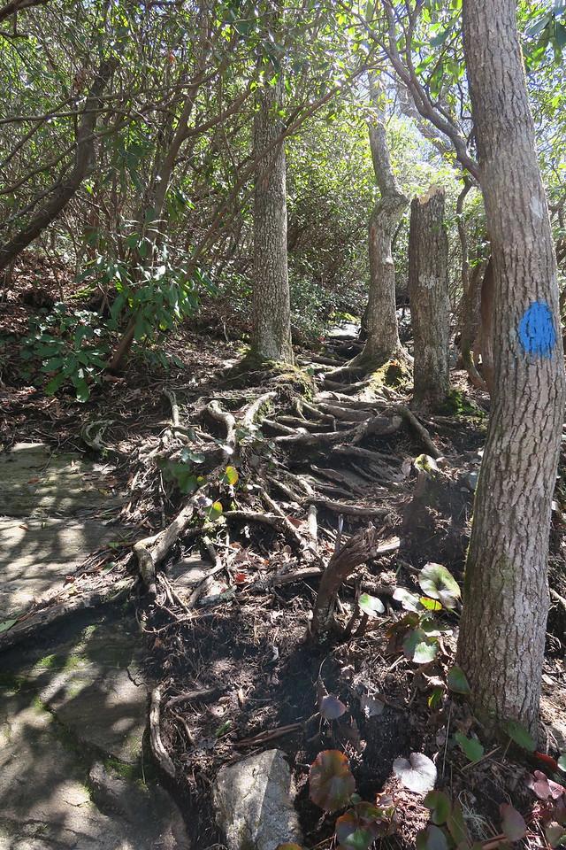 Chimneytop Trail -- 4,120'