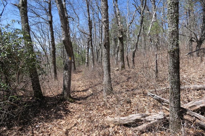 Rocky Mountain Trail -- 4,350'