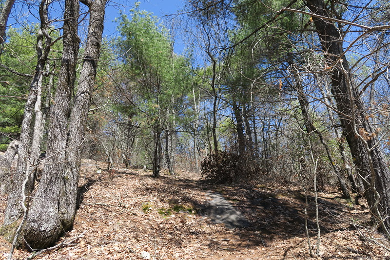 Rocky Mountain Trail -- 4,150'