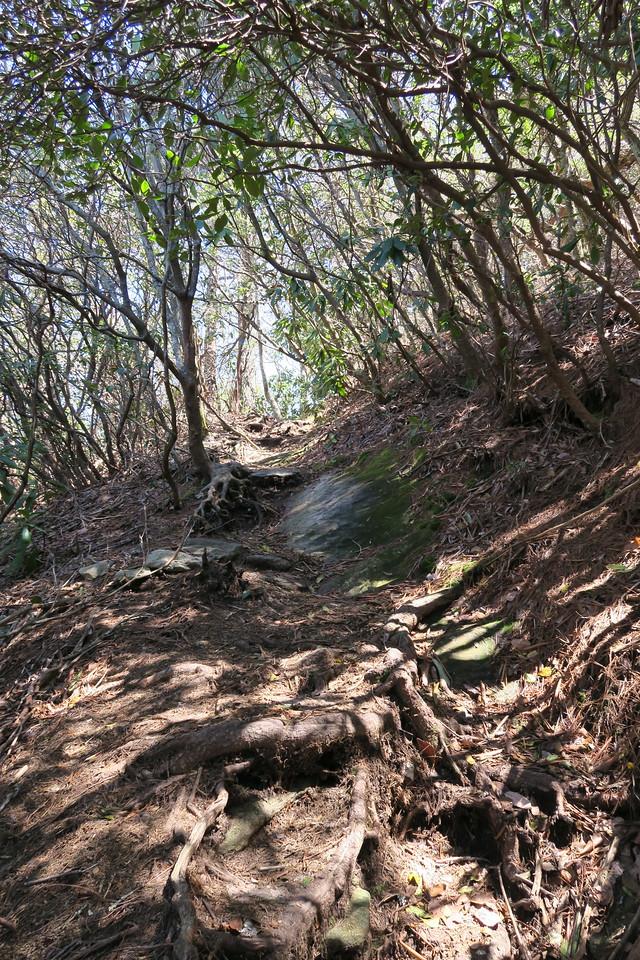 Chimneytop Trail -- 3,800'