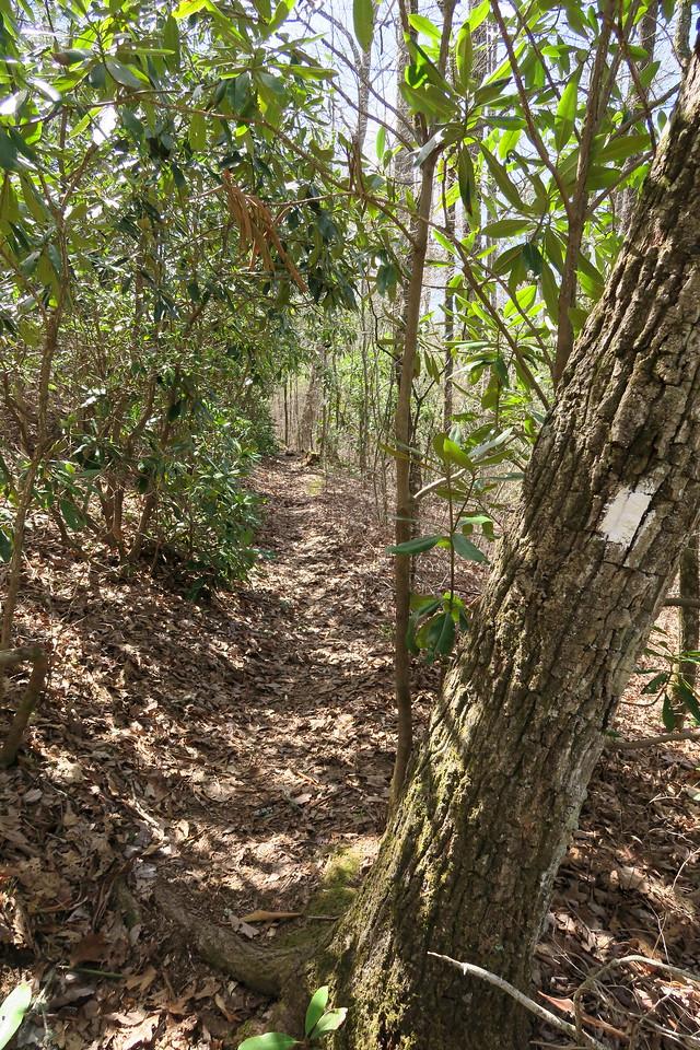 Headwaters Trail -- 3,550'