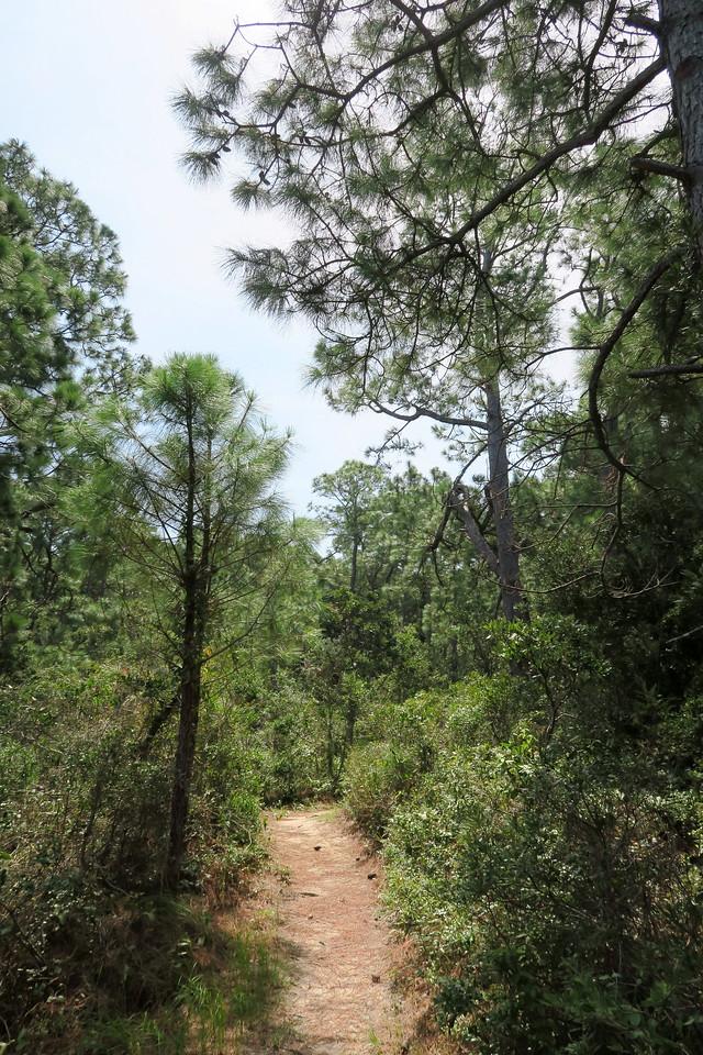 Hammock Hills Nature Trail