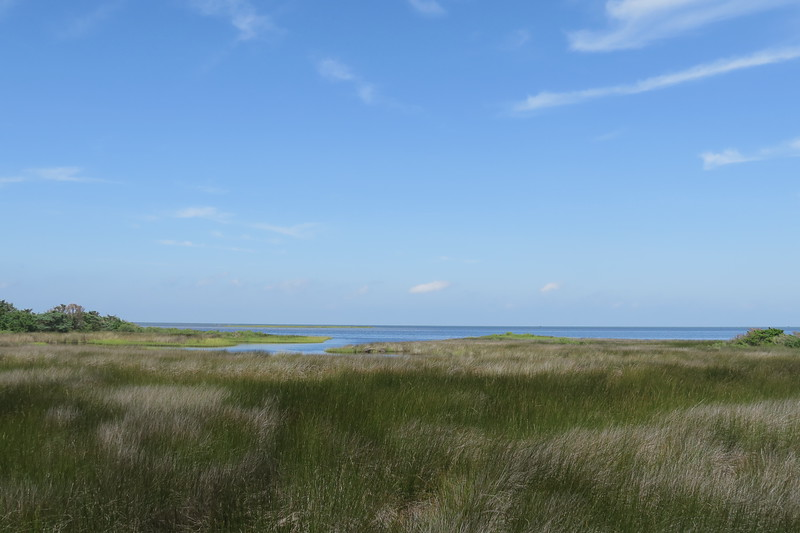 Pamlico Sound Viewpoint