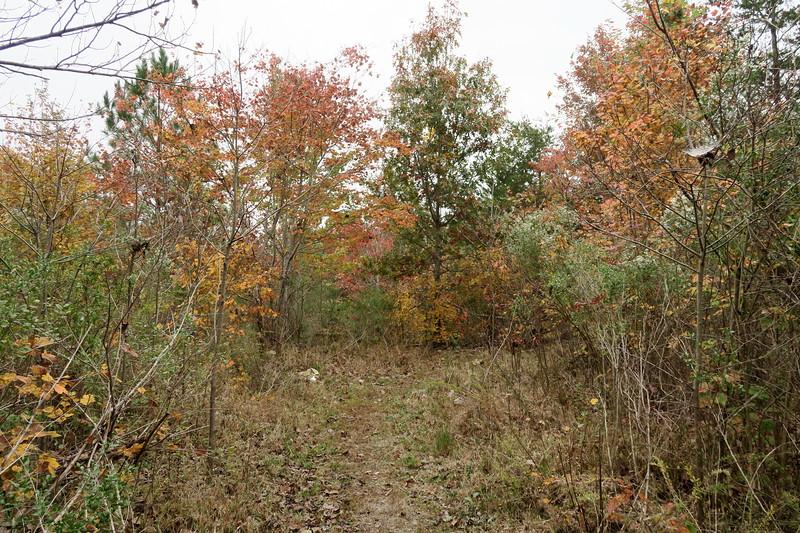 Uwharrie Trail