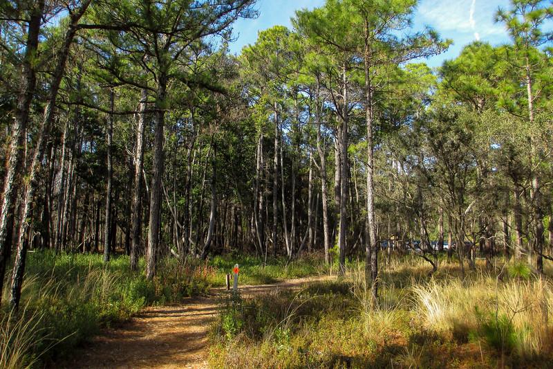 Flytrap Trail