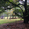 Wnadering around the Rockefellers backyard beneath sprawling oak branches with the old spring house in the distance...