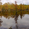 A panorama of the cypress-tupelo swamp which comprises the northern end of the millpond...