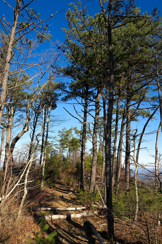 World's Edge 'Trail'