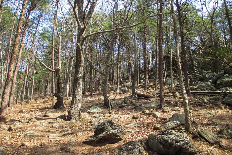 Rocktop Trail - 930'