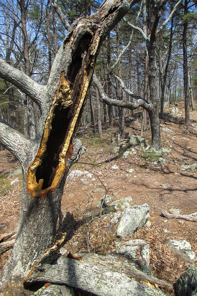 Rocktop Trail - 1,350'