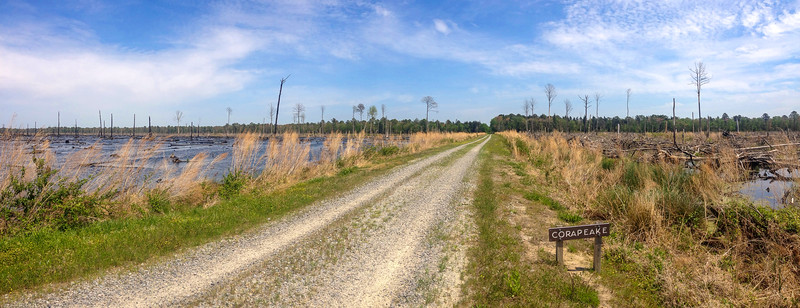 Corapeake Ditch Trail