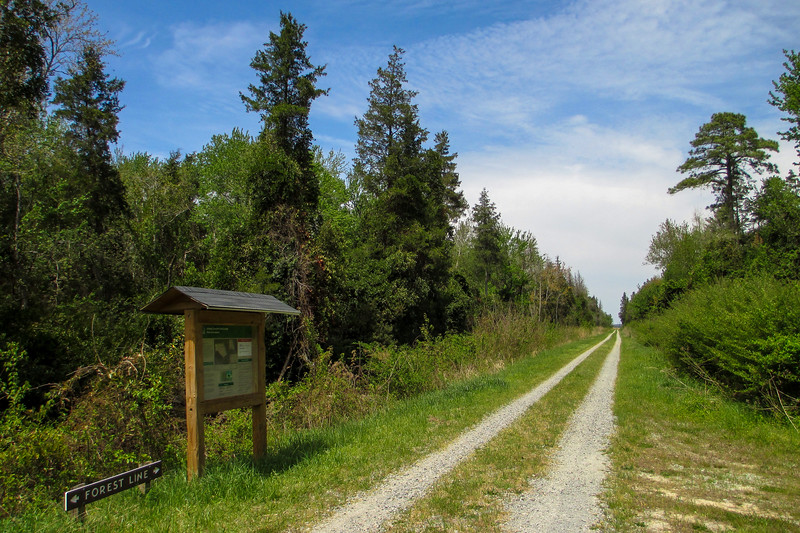 Kim Saunders-Forest Line Ditch Trail Junction