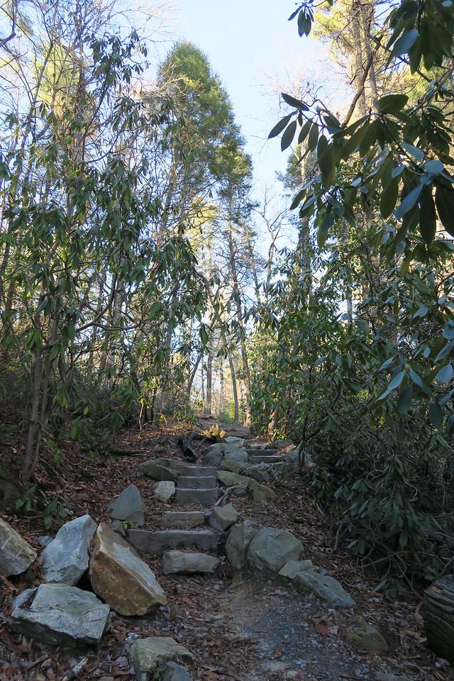 Grassy Creek Falls Trail