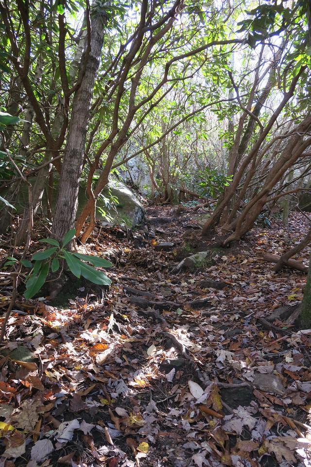 Stone Mountain Trail --  3,550'