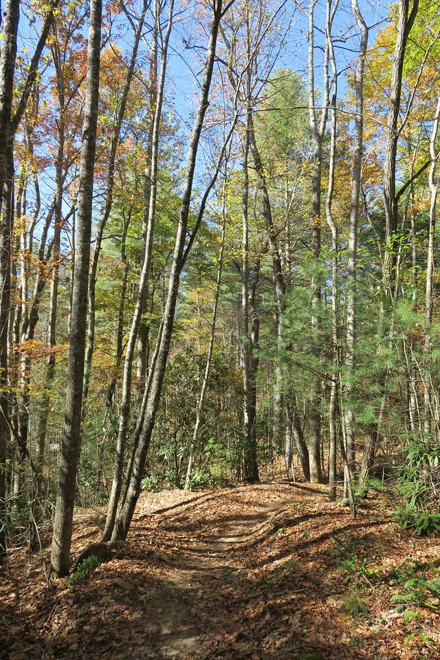 Rocky Ridge Trail --  2,550'