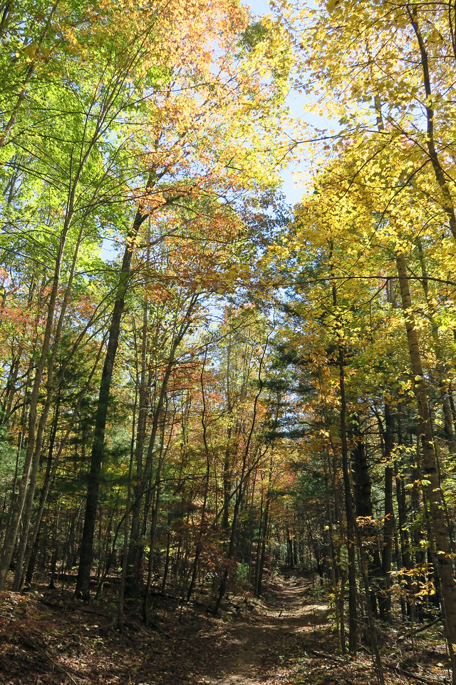 Rocky Ridge Trail --  2,900'