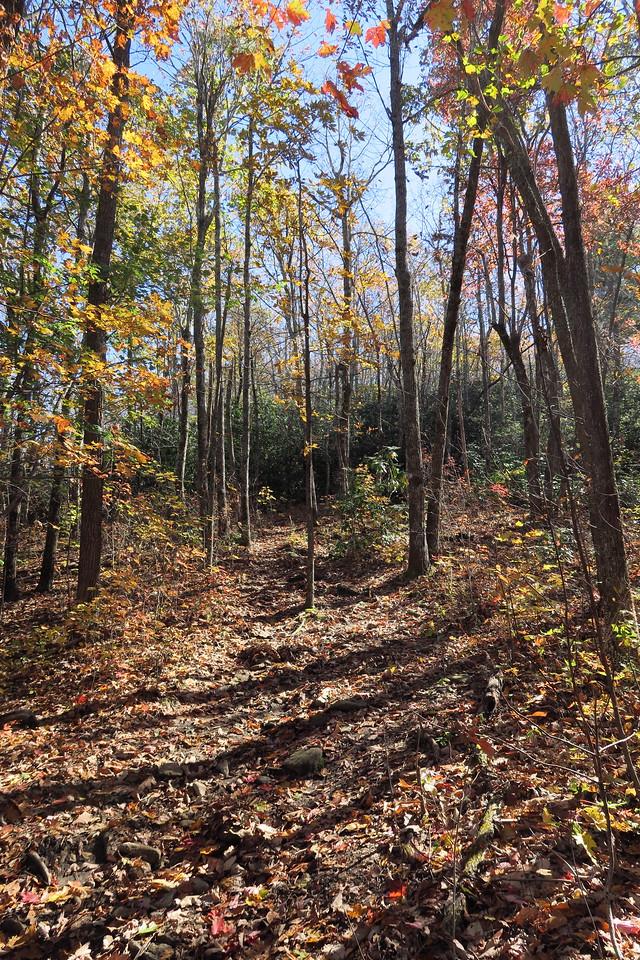 Stone Mountain Trail --  3,480'